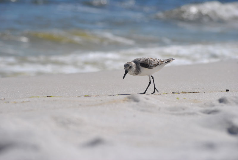 bird on a sandy beach